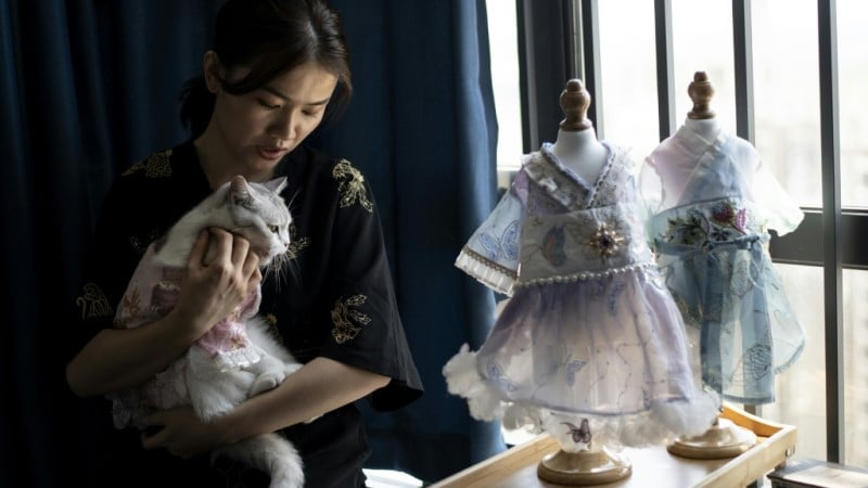 Pet Clothing in China