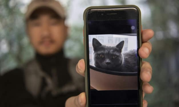 Shanghai's Pet Detective Reunited Thousands of Beloved Pets with Owners