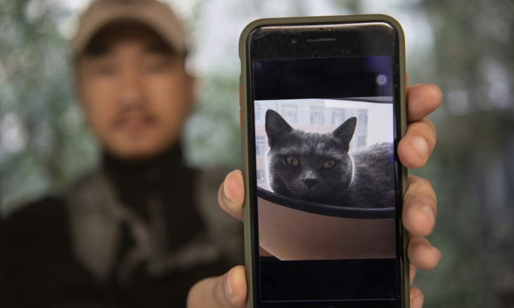 Pet Detective in China ©AFP
