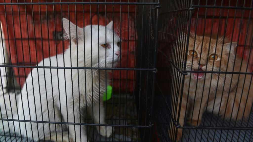 Pets During Lockdown Pakistan.afp