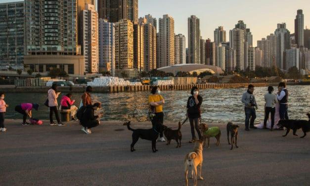 Pets Face Quarantine After Dog Tests Positive in Hong Kong