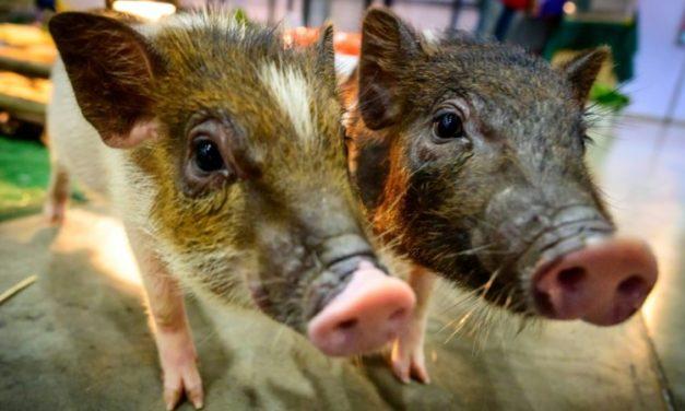 Mammals Can Breathe through Anus in Emergencies