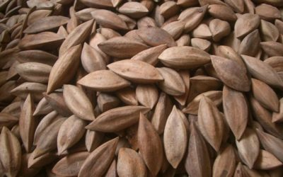 Pili Nuts: The Superfood You Probably Haven't Tried Yet