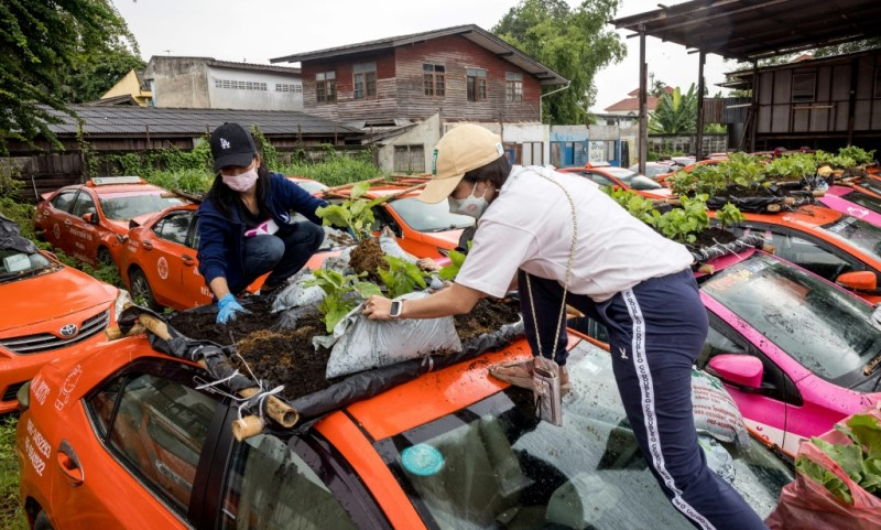 Planting Vegetables on the Roof of a Vehicle