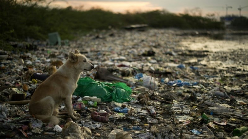 Plastic Pollution Choke's Marine Mammals