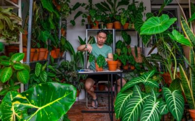 Malaysians Get Passionate about Potted Plants as Demand Exploded