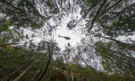 Australia's Secret Mission to Save 'Dinosaur Trees' from Bushfires