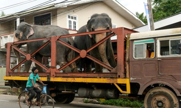 Sri Lanka Propose Tougher Penalties to Protect Elephants After Mass Deaths