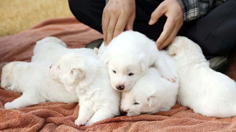 Puppies owned by South Korean leader
