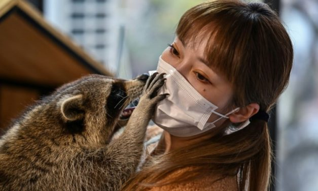 Raccoons to Snakes: Shanghai Animal Cafes Expand to Exotics