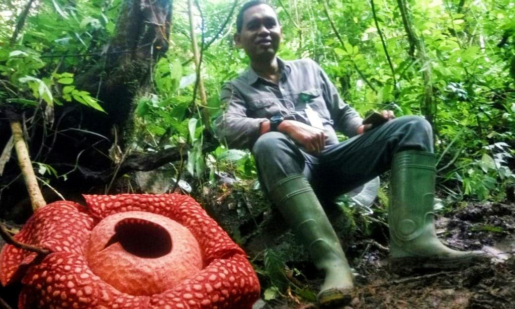 Rafflesia tuan-mudae Indonesia.afp