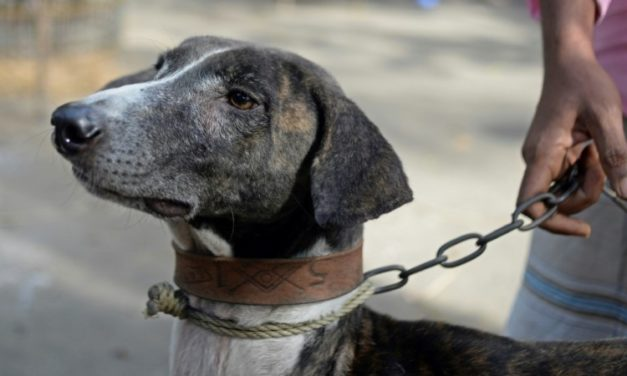 Race to Save Bangladesh Hound From Extinction