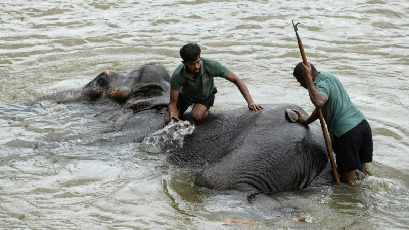 Relying on Country's elephant