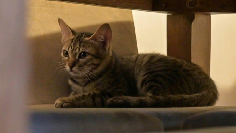 Rescued Feral Kitten