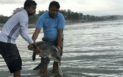 Multiple Turtles Rescued from Entangled Plastics on Bangladesh Beach