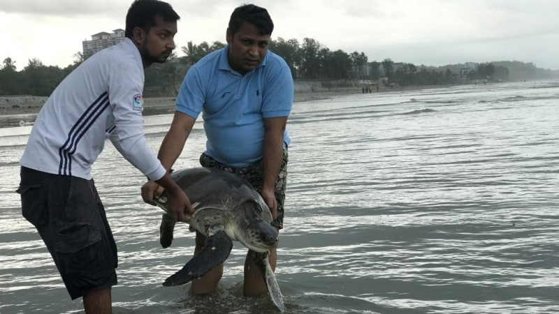 Rescued Turtle Released Back to the Sea in Cox's Bazar.afp