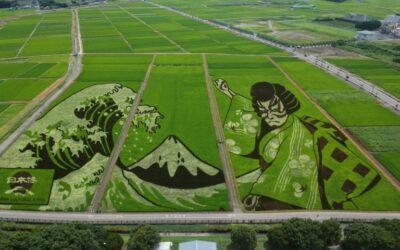 Planted Art: Japan Rice Field Work Marks Tokyo Olympics