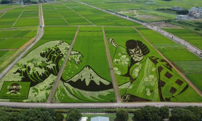 Rice Field Artwork