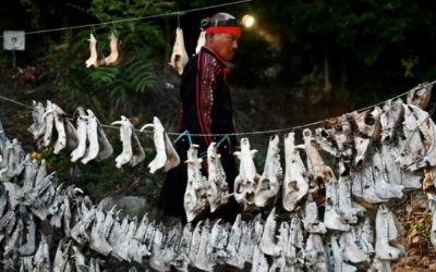Indigenous Tribes Hope Taiwan Court Will Protect Hunting Traditions