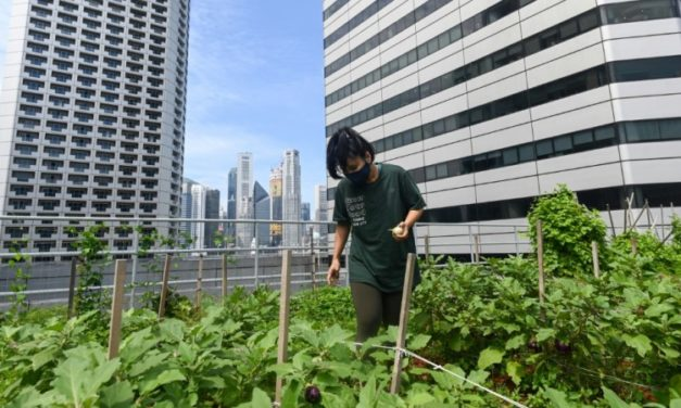 Rooftop Farming Takes off in Singapore