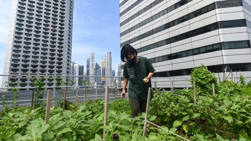 Rooftop Farming in Singapore