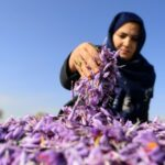 Afghan Saffron Boss Says Taliban Will Not Silence Her