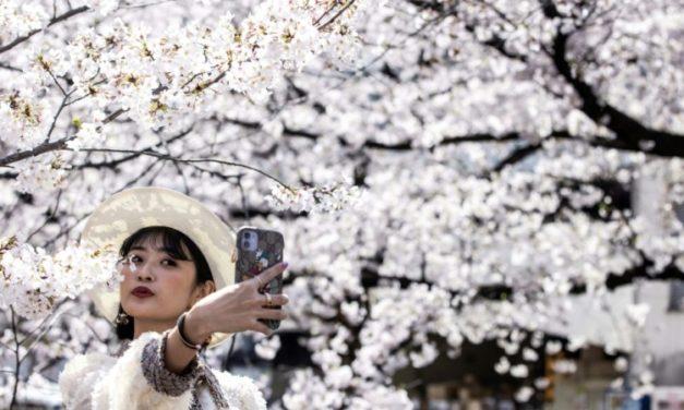 Sakura Selfies: Tokyo Enjoys Cherry Blossoms Despite Virus Warning