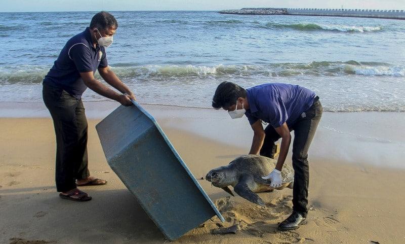 Sea Turtle in Colombo