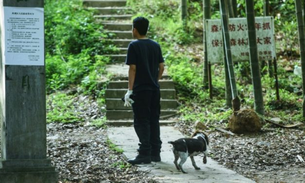 Chinese Hunt for Escaped Leopard Dangles Chickens as Bait