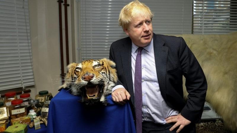 Seized Tiger Skin Rug