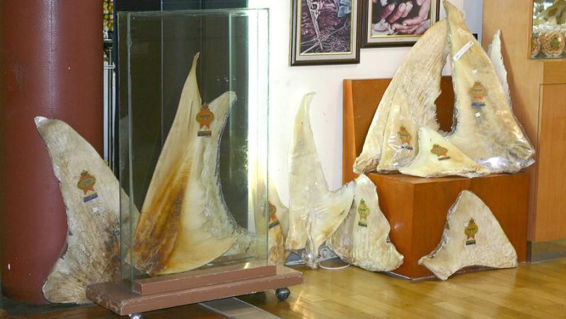 Shark Fins Store Indonesia | Rani Soemardjan