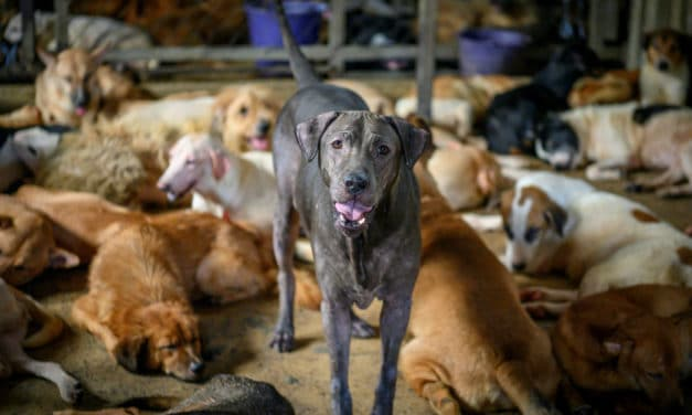 Overcrowded Thai Dog Shelter Blames Coronavirus for Drop in Donations