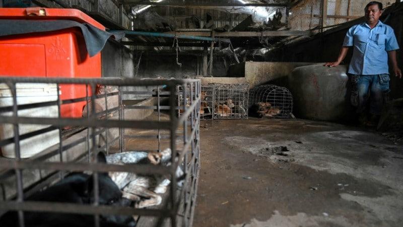 Slaughterhouse Owner Ouk Mol