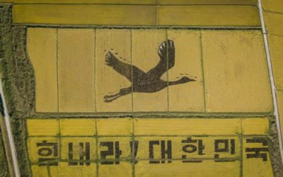 'Cheer Up': Giant Crane Out Carved in South Korea's Rice Fields