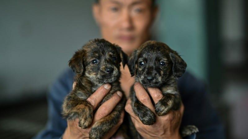 Stray Animals in China