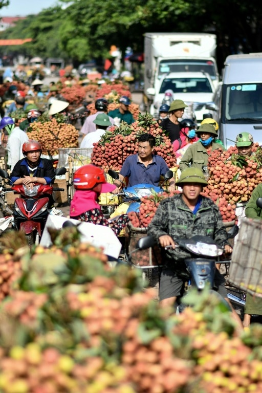 The Lychee Business in Vietnam.afp