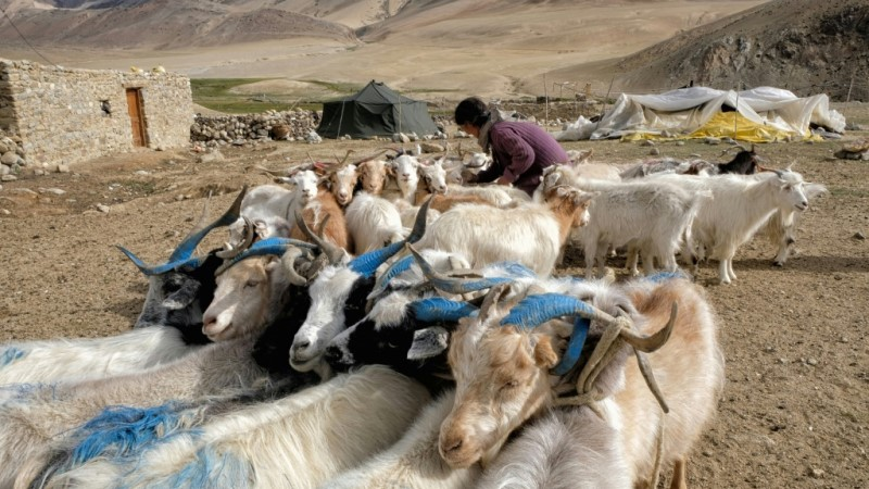 The Military Tensions are the Latest Blow for the Herders.afp