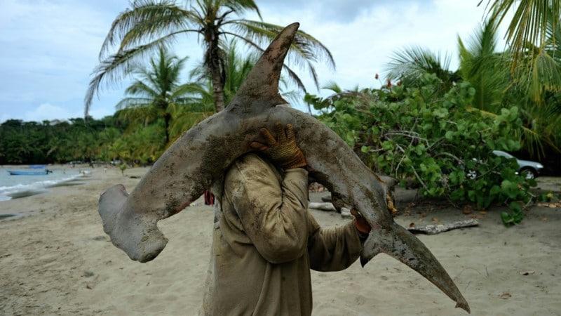 Threat of Extinction