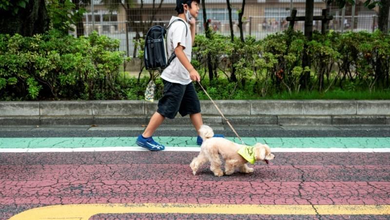 Tokyo's Neighborhood Watch Pooches