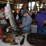 Bats and Snakes: Indonesia's Extreme Meat Market Booms Despite Virus Warning