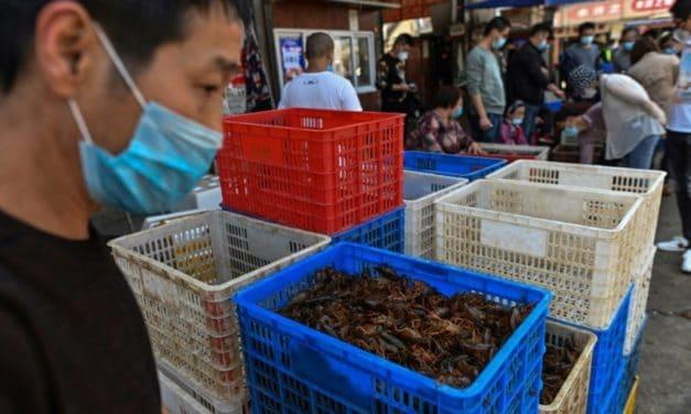 WHO Urges Halt to Sale of Live Wild Mammals in Food Markets