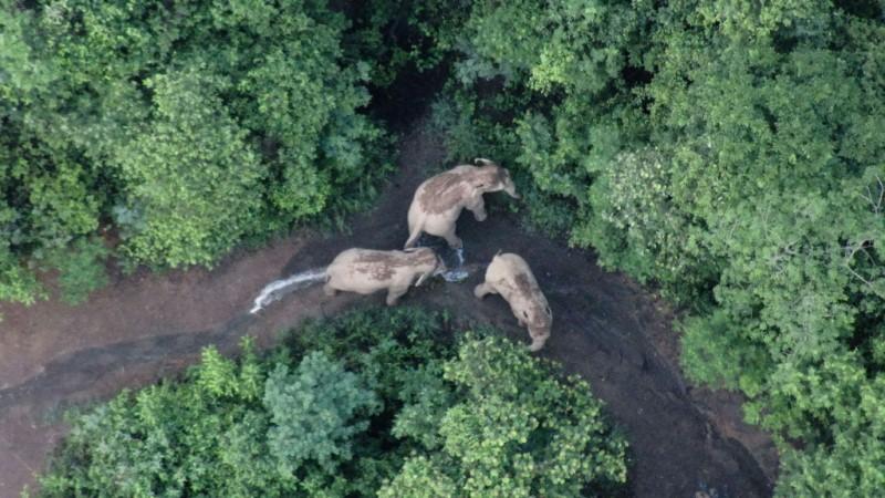 Traveling Elephants