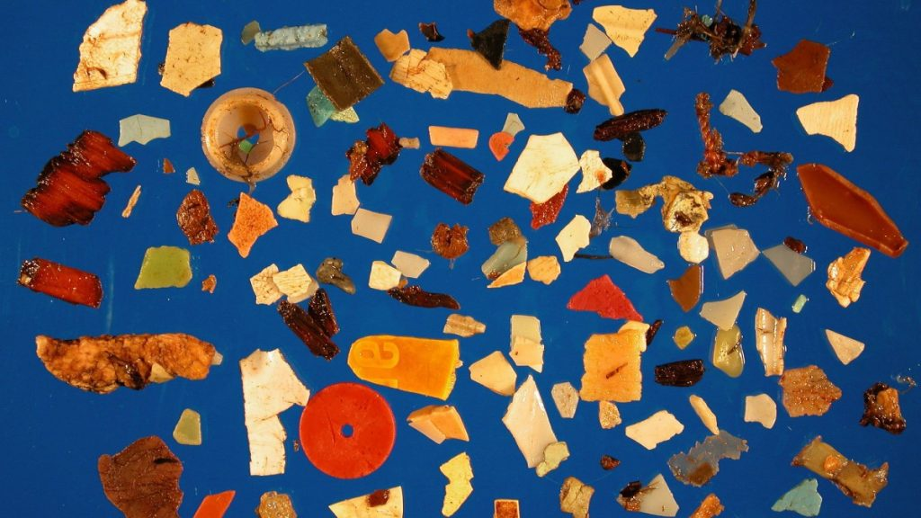 Plastics Found inside of a Fulmur Bird