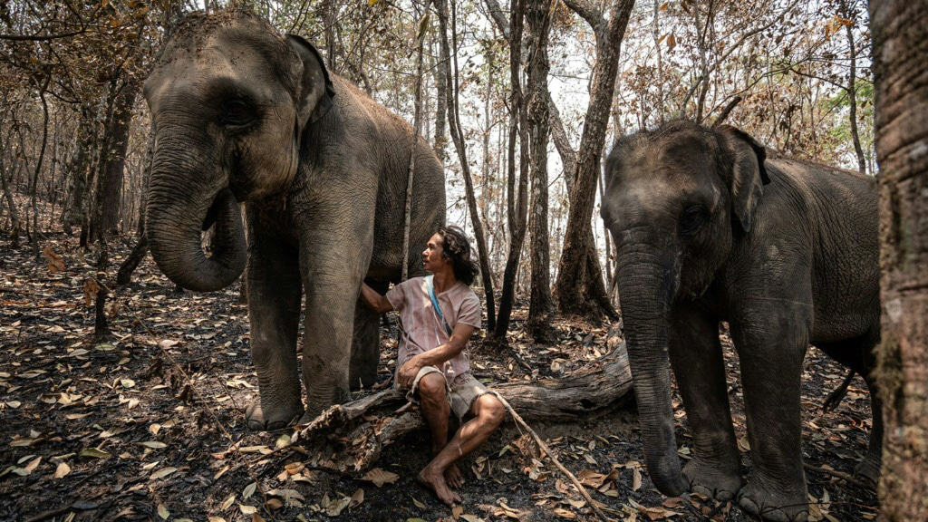 Unemployed Elephants in Thailand.afp
