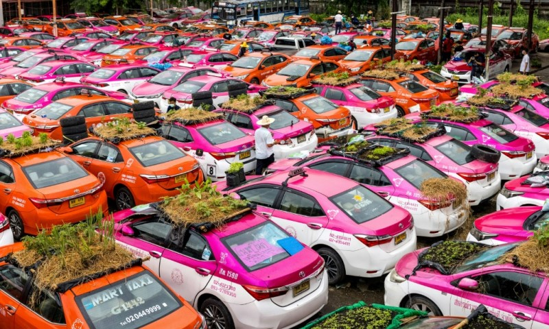 Vegetable Gardens on Taxis