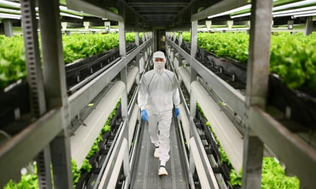 Sustainable Agriculture: Vertical Farming Takes Off in Aging Japan