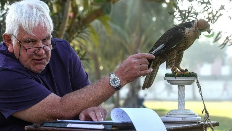 Veteran Falcon Conservationist