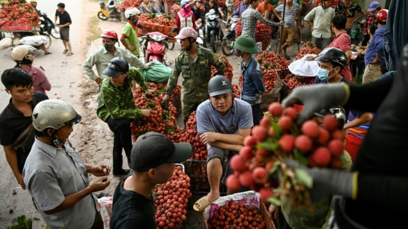 Vietnam Fresh Lychees.afp