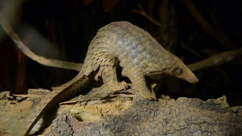 Vietnam Wild Animal Species