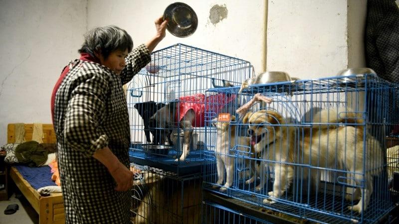 Wen Junhong's Rescued Animals